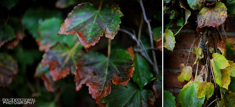 Leaves 01c