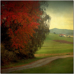 Herbstlich sonnige Tage  -  Autumns Sunny Days (pixel_unikat) Tags: autumn red tree fall field leaves farmhouse landscape austria cow sterreich path meadow textured muehlviertel upperaustria idream vanagram thankstoplayingwithbrushesandskeletalmessfortextures