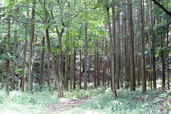 三保市民の森