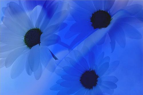Blue by Bahman Farzad