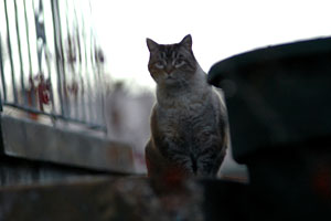 Feral cat, aka community cat