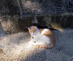 krip 2010 (jojof) Tags: holiday kitty bra w60 krip