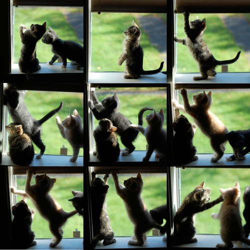 Window_Kittens