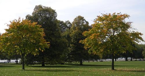 Hyde Park Autumn Autumn Trees Serpentine Hyde