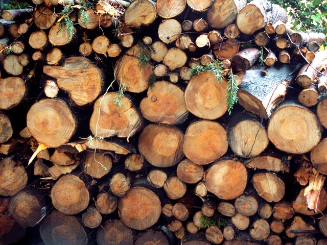 Pile o' wood