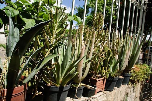 My garden 0078 September 24, 2010