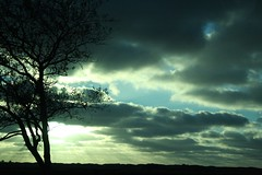 Sunlight (alina.) Tags: blue light sunlight black tree canon eos texel sihlouette 1000d canon1000d
