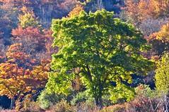 In the Graveyard Fields (esywlkr) Tags: autumn trees fall forest landscape nc northcarolina blueridgeparkway graveyardfields wnc brp westernnorthcarolina brpw