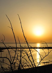 Atardecer (SrPolo) Tags: sunset espaa beach nature contraluz atardecer andaluca spain playa puestadesol cdiz zahora nikond700 srpolo nikkor50mmf14gafs