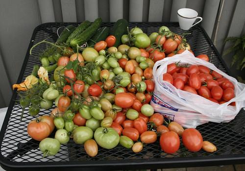 My Last Harvest
