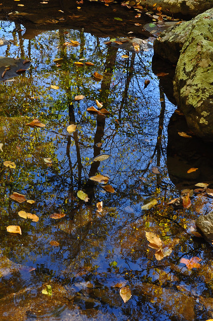 Jones Run Reflection