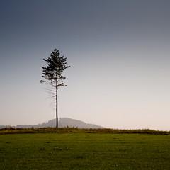 Sauerland (jpk.) Tags: 2010 canoneos7d gleidorf oktober sauerland unterwegs urlaub reise hügel berg baum nadelbaum quadrat natur allein einzeln isoliert ©janphilipkopka efs281755mm