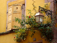 Au 33, dans une rue de Riquerwihr - 33, in a street of Riquewihr (Michele*mp) Tags: house france window yellow lanterne jaune october europe alsace shutters maison fentre octobre volets riquewihr coth lesplusbeauxvillagesdefrance michelemp coth5