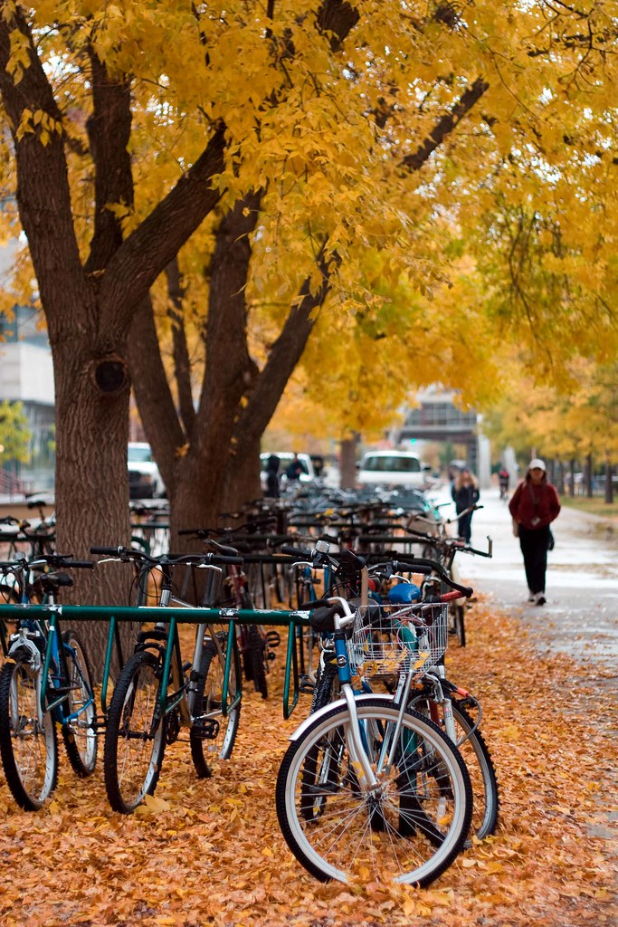 autumn at Colorado State University