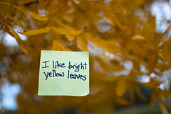 I like bright yellow leaves (spudart) Tags: park autumn usa chicago tree art fall love nature leaves thanks writing handwriting paper photo illinois artwork october colorful oct thoughtful appreciation note photograph northside grateful publicart foundart thankfulness gratitude enjoyment lincolnsquare liking yellowleaves ilike admiration ilikethis acknowledgment chicagoparkdistrict 60625 winnemacpark d80 nikond80 ilikenotes foursquare:venue=147843