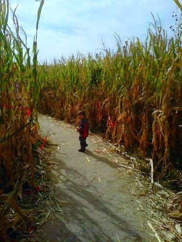 The Corn Maze