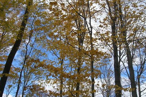 Pond trees CBB