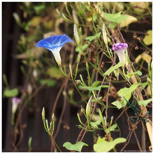 Naraisyuku (Flowers) 101023 #06