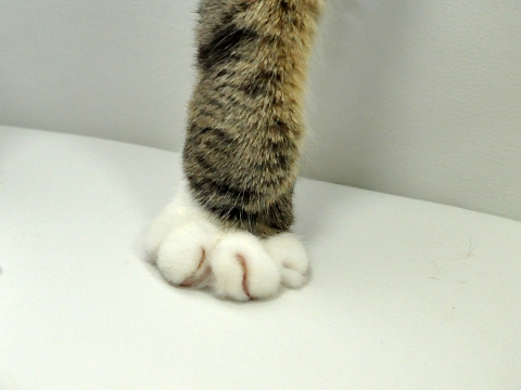 cute maru the cat and paw