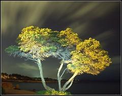 LONELINESS (Pepe Rosell) Tags: sea sky seascape tree night clouds stars arbol island noche mar mediterranean mediterraneo paisaje ibiza cielo nubes estrellas nocturna eivissa nighshot mediterranee savina ligthpainting canoneos1000d tamronspaf175028xrdiii phottixultraslimcircularpolarizerfilter67mm