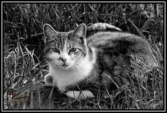 The Cat (.Markus Landsmann) Tags: pentax k20d pentaxk20d mlphoto mlphoto markuslandsmannzenfoliocom