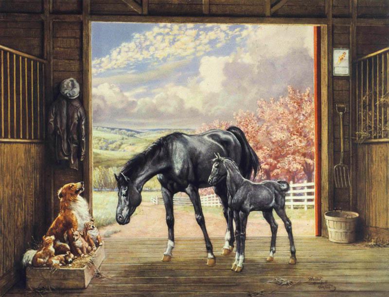 5-1 horses