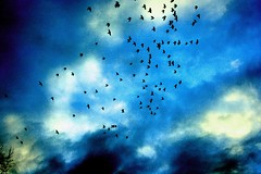 birds (rippe1) Tags: blue autumn light shadow sky black color colour detail reflection tree nature birds night composition germany evening flying impressionen moment blau conception mywinners ritapetri blaueserie