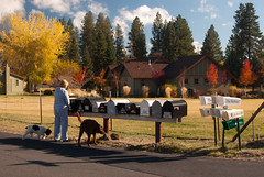 Bend Mail Drop (PeteTakesPictures) Tags: morning autumn fall dogs leaves oregon garden october mail bend suburbia pickup delivery suburbs d40 d40x bendbulletin