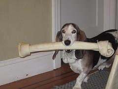 Bacon has a new bone