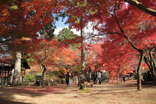 京都 黒谷の紅葉