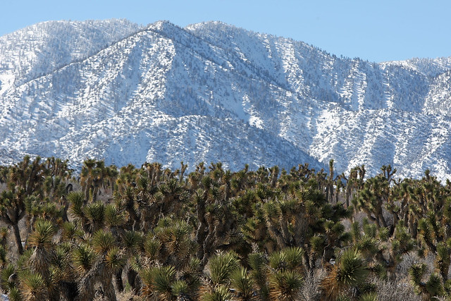 Desert foothills meet forested mountains in California. (Photo by: David McNew/Getty Images)