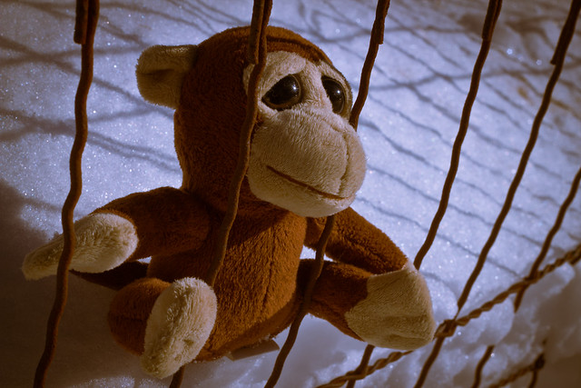 Day 284: Snow monkey languishes in prison
