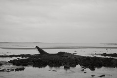 Scapa Beach, Orkney, Scotland (bm^) Tags: uk sea white black beach strand scotland blackwhite orkney nikon zwartwit unitedkingdom zee zwart wit mainland scapa schotland golfbreker d90 blackwhitephotos orcades scapabeach theorkneys  nikond90bw mygearandme mygearandmepremium