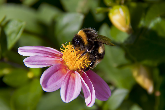 Bees_2011_17630