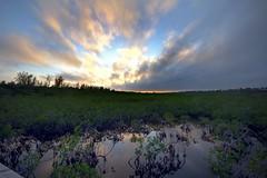 Bahama Sunset on the Mangroves (Nick Mulcock) Tags: sunset red sun beach rock clouds canon 8 sigma 16 bahamas mangroves 8mm 16mm hdr bahama d60 60d flickraward