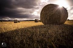 Harvest season (antonelloimineophotography) Tags: darkclouds lightandshadow greysky strawofhay field bales harvest summer