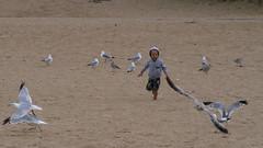 Kid chasing seagulls