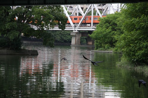 Birds enjoying a waterside