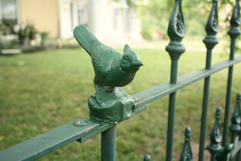 boulevard bird