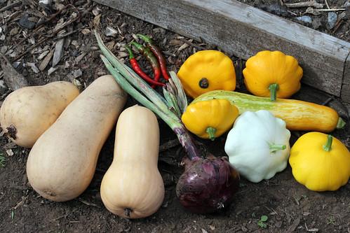 harvest  075