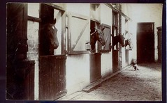 Horses in Stable vintage postcard carte postle ancienne old photo postcardcity collection 53 (loveinterestingcards) Tags: dog chien greyhound chihuahua beagle goldenretriever cat bostonterrier collie chat labrador dolphin retriever dachshund pitbull terrier american poodle vintagepostcard boxer doberman germanshepherd cockerspaniel dalmatian cockapoo pinscher americanbulldog chatcat vintagepostcarddogchien americanbulldogamericanpitbullterrierbeaglebolognesebordercolliebostonterrierboxerchihuahuacockapoocockerspanielcolliedachshunddalmatiandobermanpinschergermanshepherdgoldenretrievergreyhoundlabradorretrieverpo