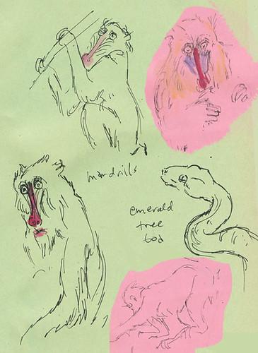 mandrills_snakeweb