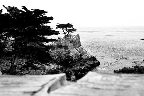 Monterey Sept 2010 122