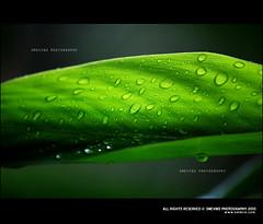 Go Green, Save Nature (Smevin Paul - Thrisookaran !! www.smevin.com) Tags: