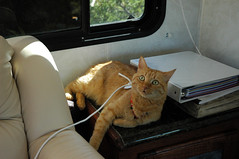 Carmella in the bus (xcalakattack) Tags: trip lake bus cat with conversion first mighty carmella edun