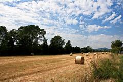 Diventa giallo il grano (gcarmilla) Tags: sky italy cloud clouds rural countryside italia nuvole campagna cielo lazio rurale