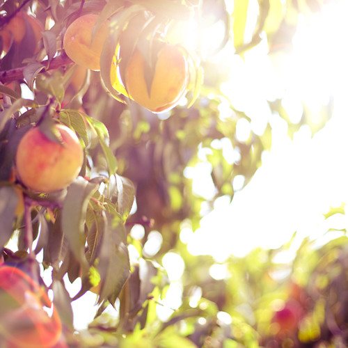 holy peach