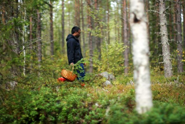 moses i skogen