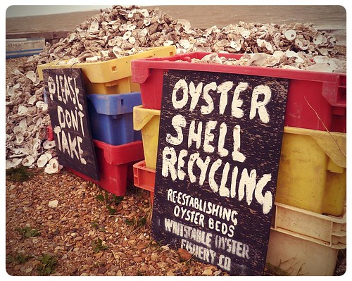 Whitstable ~ Oyster shells recycling on the beach