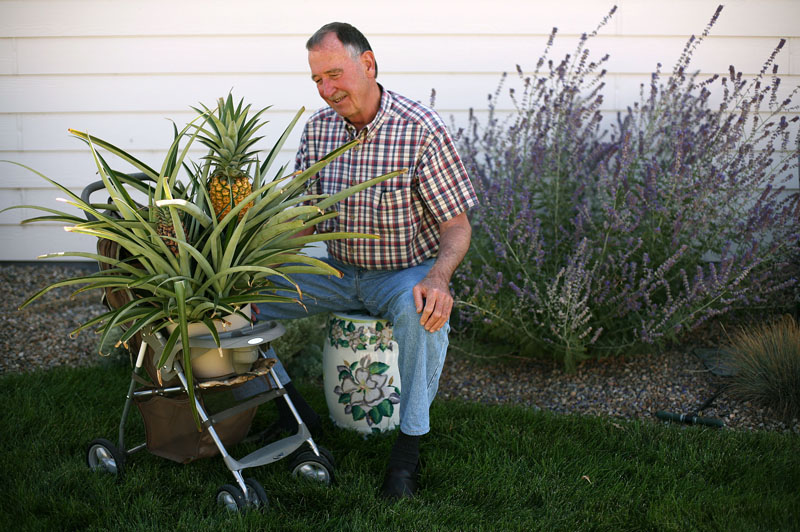 20100909_OUTHOUSE_PINEAPPLE_PORTRAIT_1